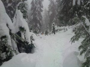 Beautiful new snow