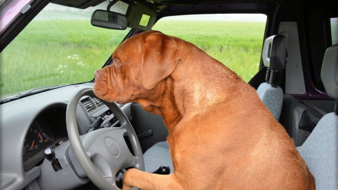 maine politician proposes seat belt law for dogs the dog network. Black Bedroom Furniture Sets. Home Design Ideas