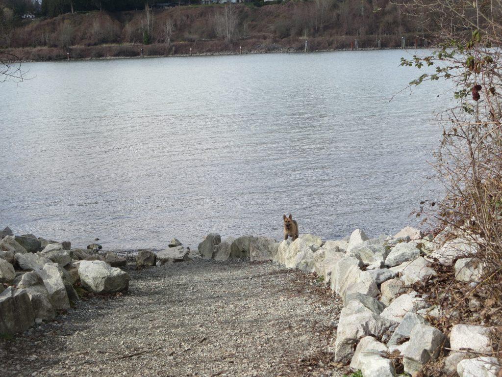 Derby Reach Regional Off-Leash Dog Park, Langley, BC (870)