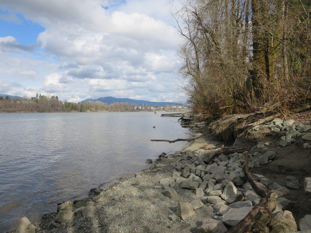 Derby Reach Regional Off-Leash Dog Park, Langley, BC (873)