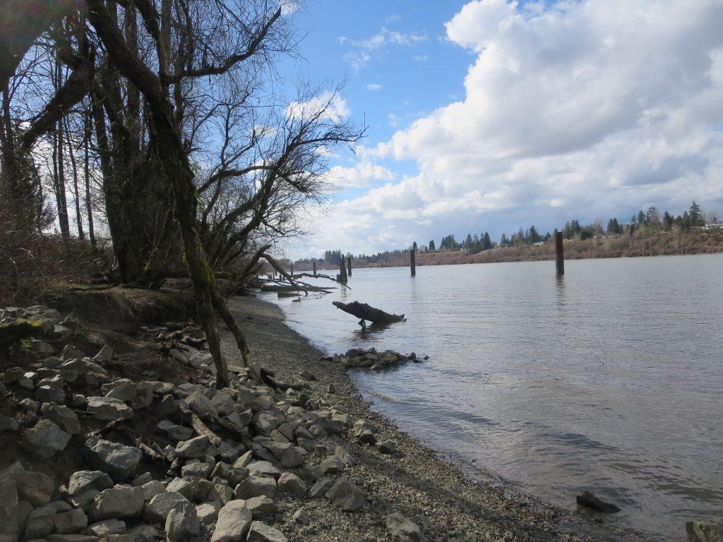 Derby Reach Regional Off-Leash Dog Park, Langley, BC (874)