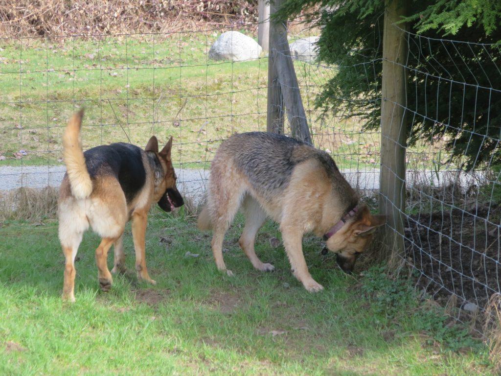 Derby Reach Regional Off-Leash Dog Park, Langley, BC (881)