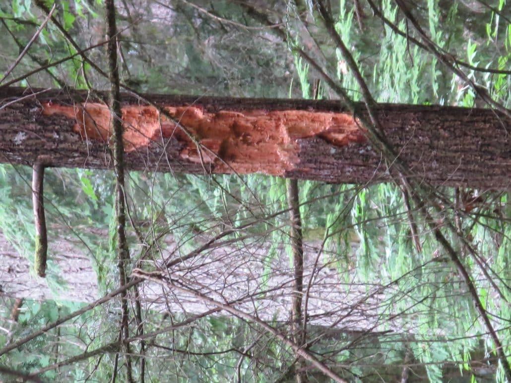 Chilliwack-Cultus Lake – 7 Sisters Trail (9)