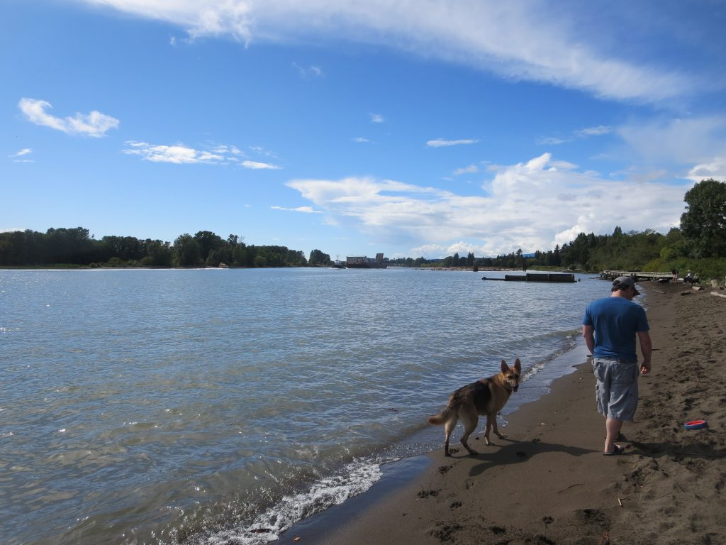 Fraser River Park (off-leash dog park), Vancouver, BC