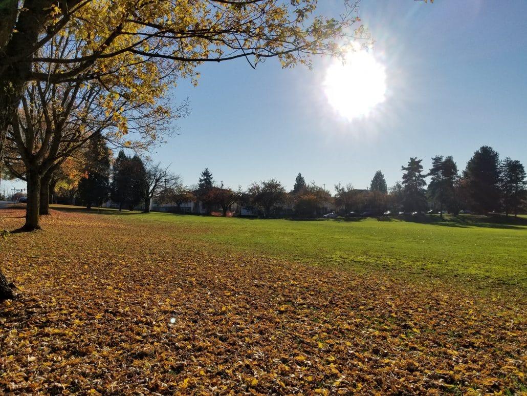 Killarney Off-Leash Dog Park, Vancouver, BC (8)