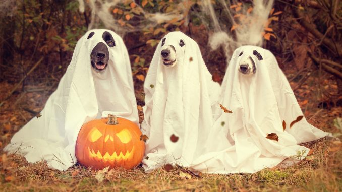 Dogs enjoying Halloween