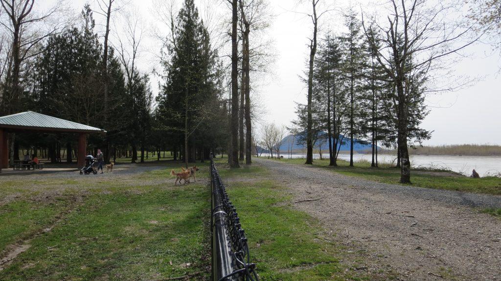 Island 22 Regional Off-Leash Dog Park - Chilliwack - BC (144)