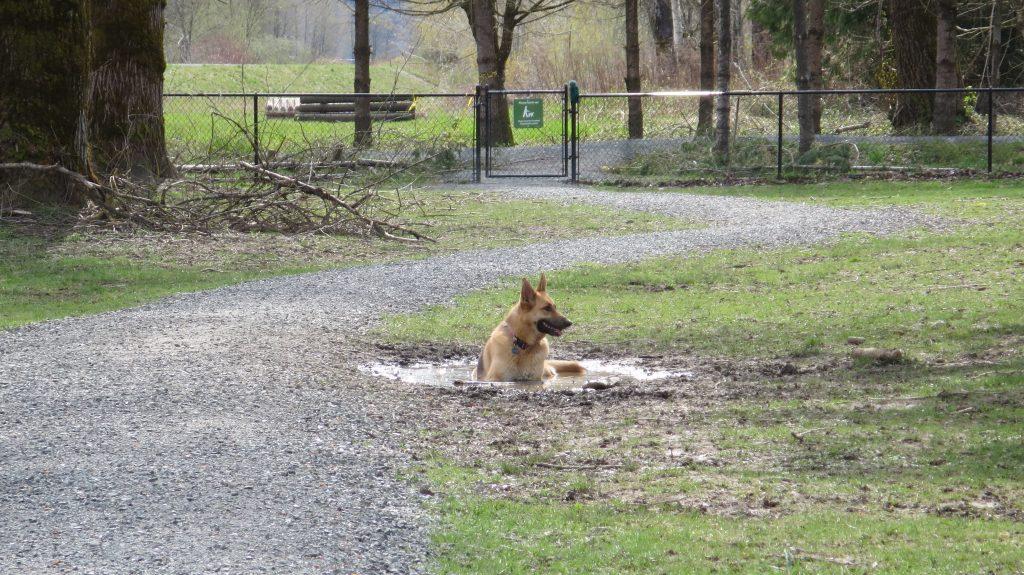 Island 22 Regional Off-Leash Dog Park - Chilliwack - BC (146)