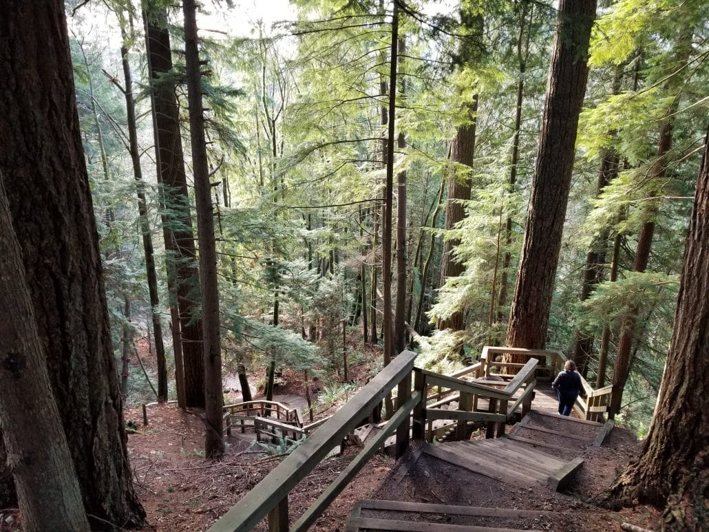 Capilano Regional Park, North Vancouver, BC - Stairs