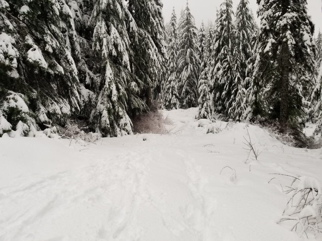 Cypress Mountain Cabin Area, West Vancouver, BC (12)