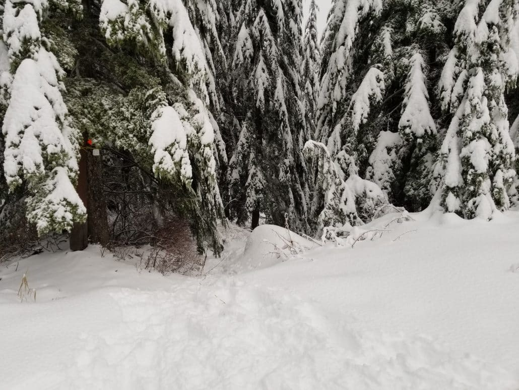 Cypress Mountain Cabin Area, West Vancouver, BC (13)