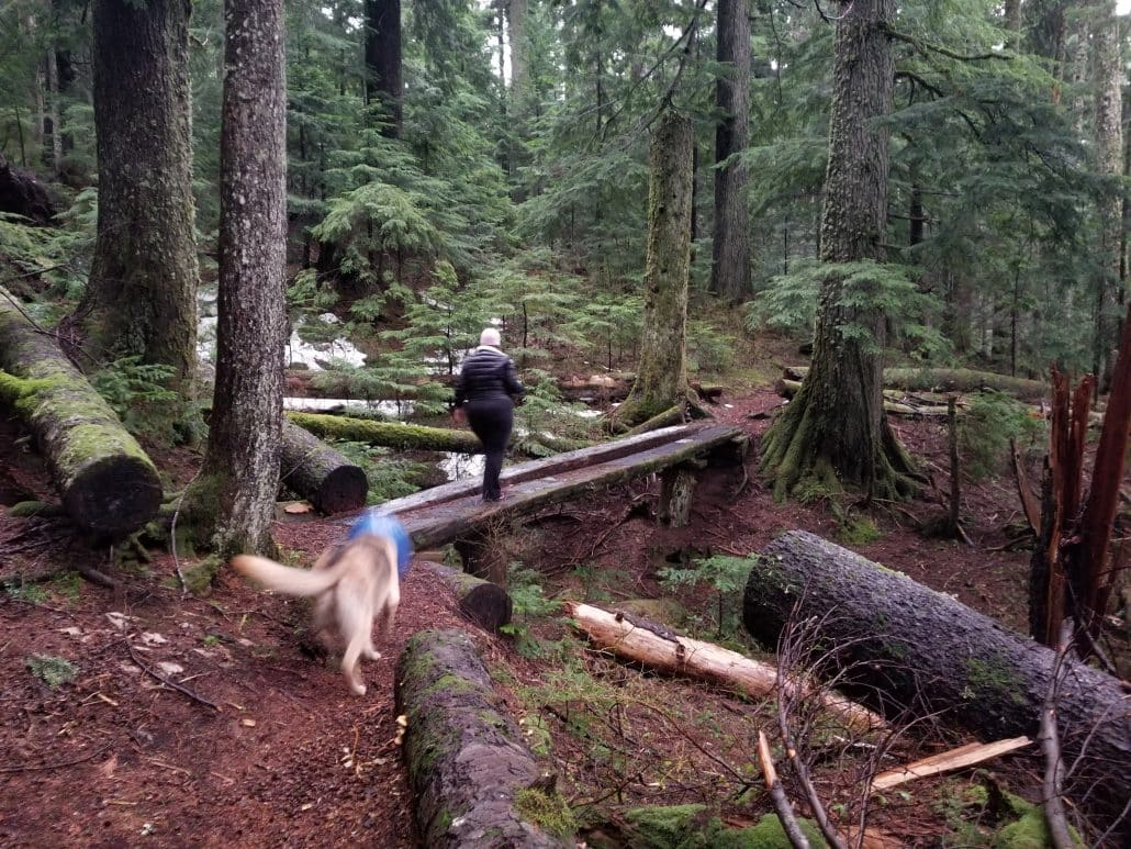 Cypress Mountain Cabin Area, West Vancouver, BC (9)