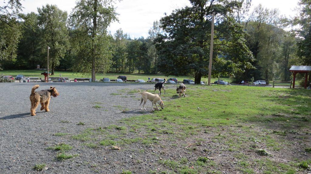 Vedder Park Dog Off-Leash Area, Chilliwack, BC