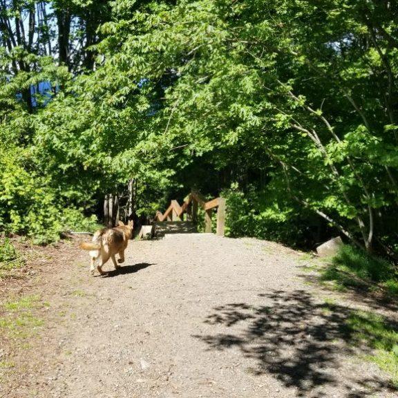 Invemere Dog Park, Nanaimo, BC (5)