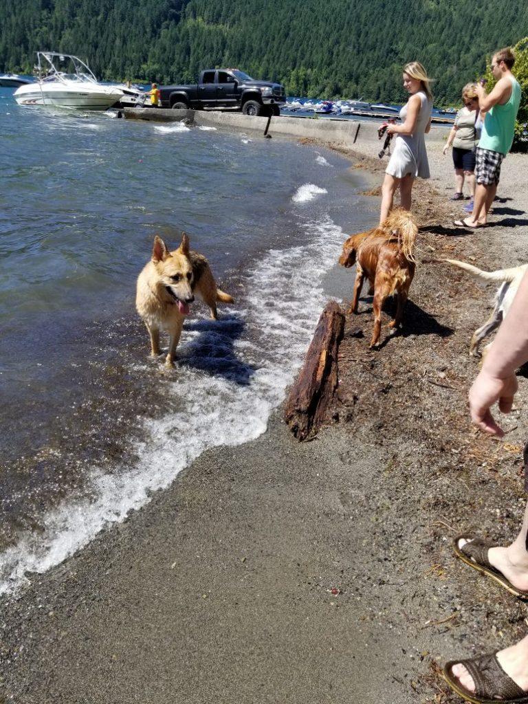 Cultus Lake Off-Leash Dog Park - Cultus Lake - BC