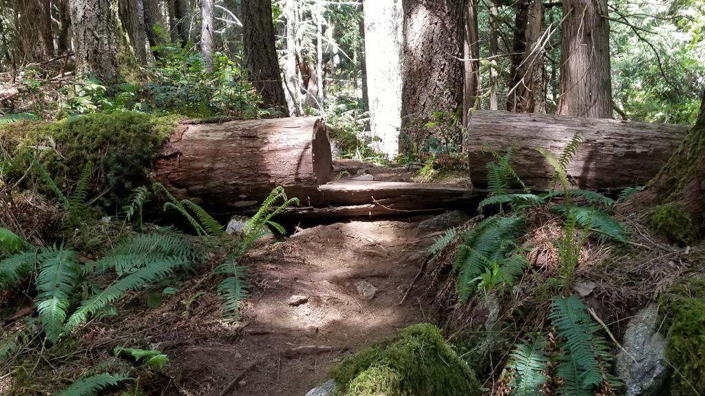 Bosumarne Falls Off-Leash Hike - Fraser Valley - BC (25)