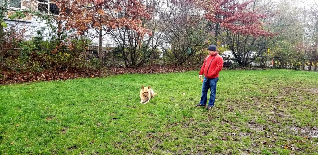 Eaglewind Off-Leash Dog Park – Squamish, BC