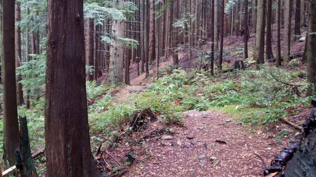 Ridge Park Off-Leash Dog Park - Coquitlam - BC (3)