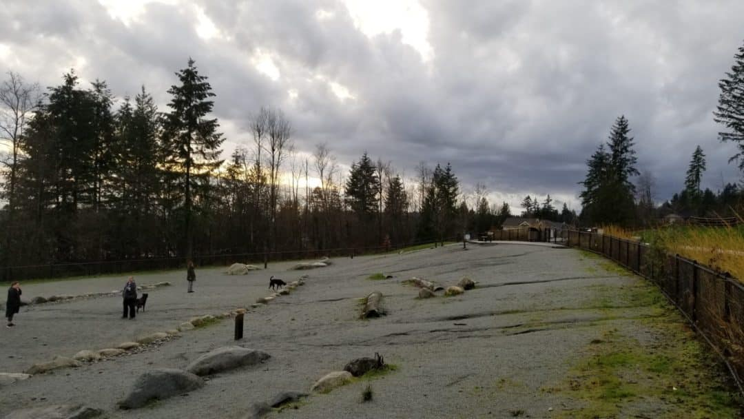 Leigh Park Off Leash Dog Park-Coquitlam-BC (4)
