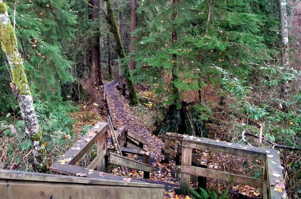 Miller Park Off-Leash Dog Park, Coquitlam, BC (3)