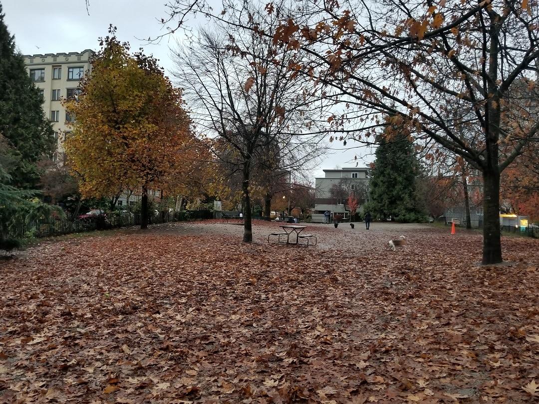 Nelson Park (4)