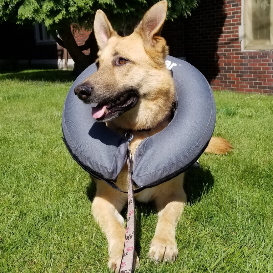 Inflatable Cone of Shame