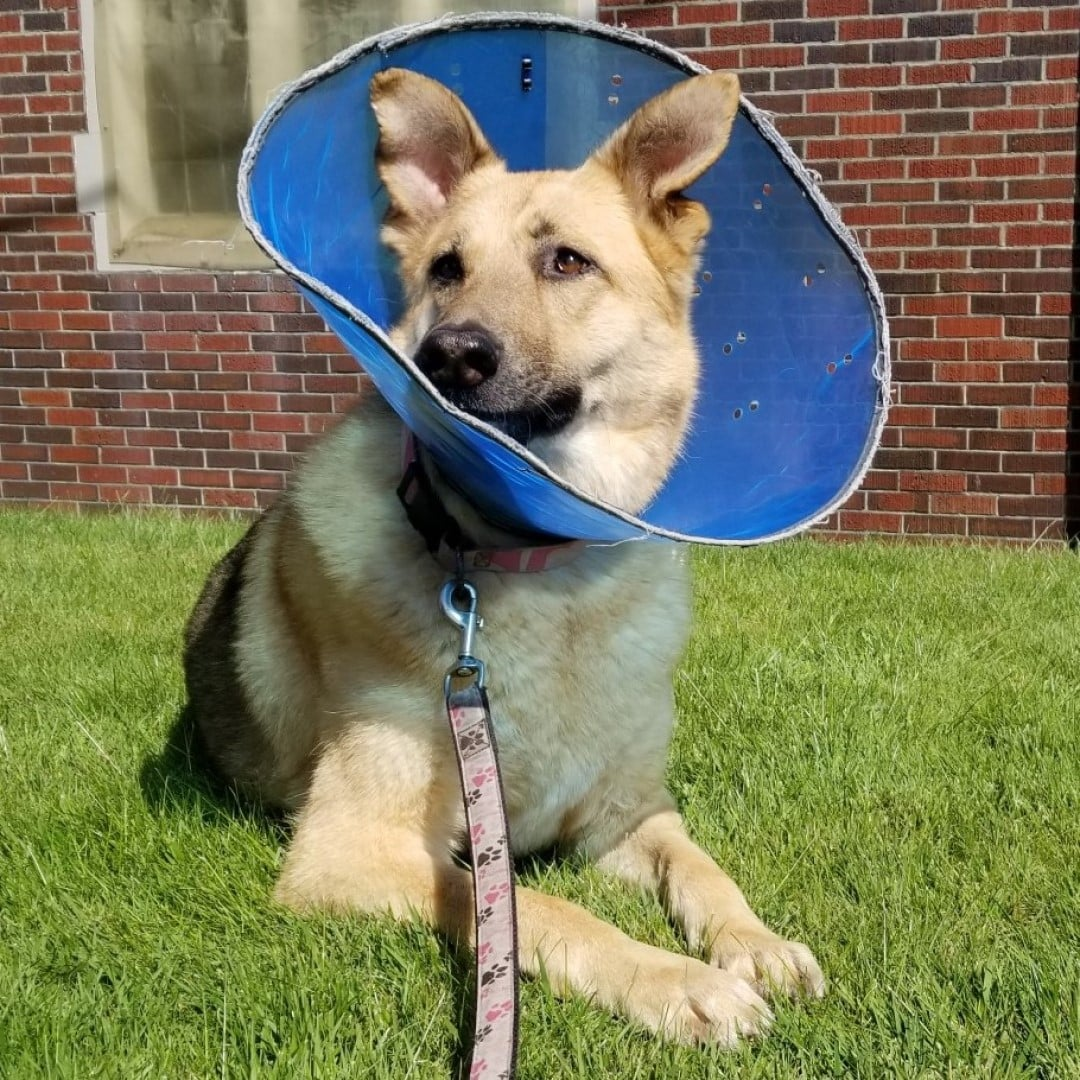 Dog Hot Spots - Cone of Shame