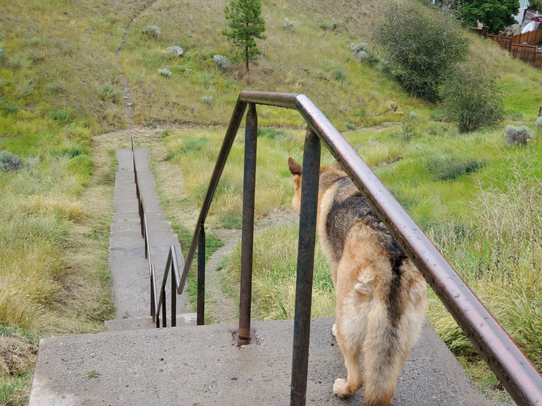 Arrowstone Off-Leash Dog Park, Kamloops, BC