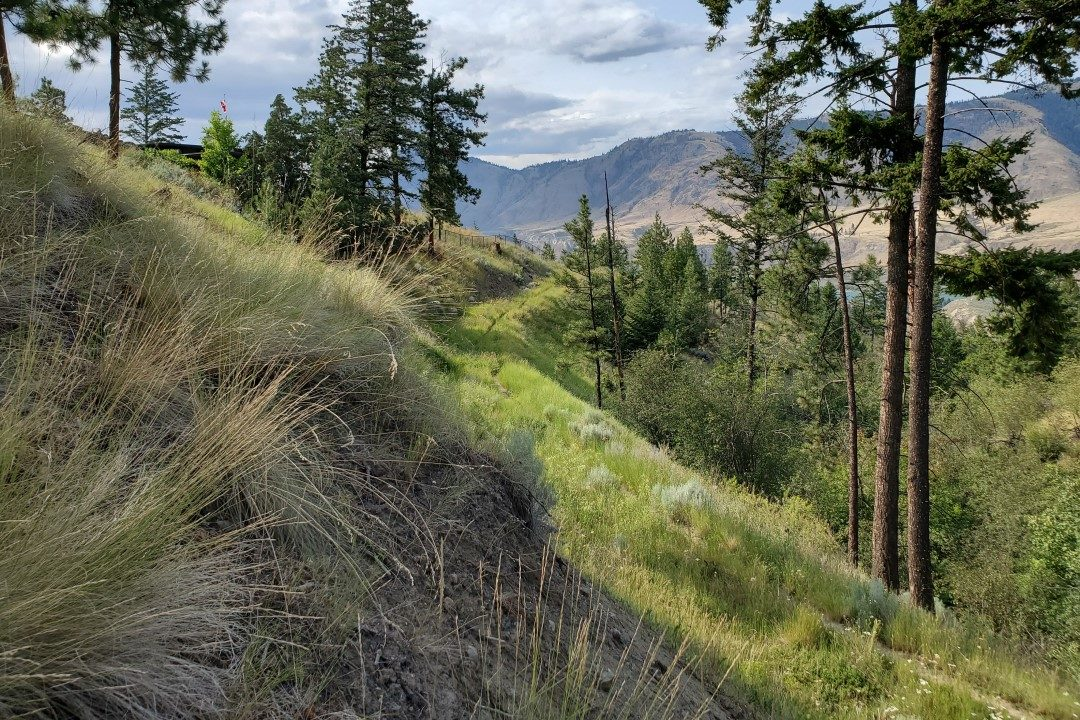 Trail to the West - Capilano Off-Leash Dog Park - Kamloops - BC (7)