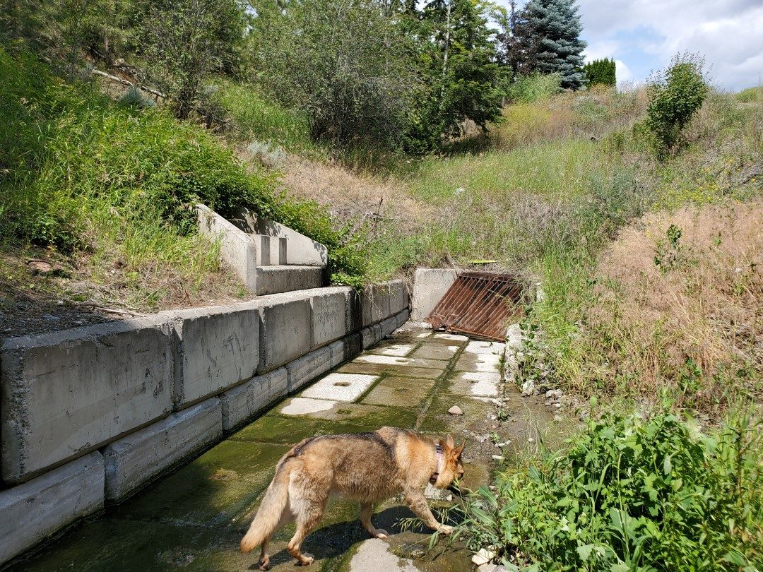 Storm Drain on the South Side of Chino Place - Gleneagles Off-Leash Dog Park - Kamloops - BC (3)