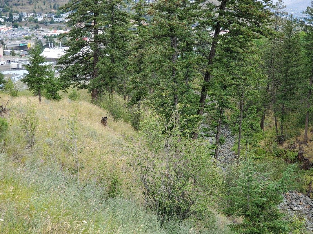Hugh Allan Off-Leash Dog Park, Kamloops, BC