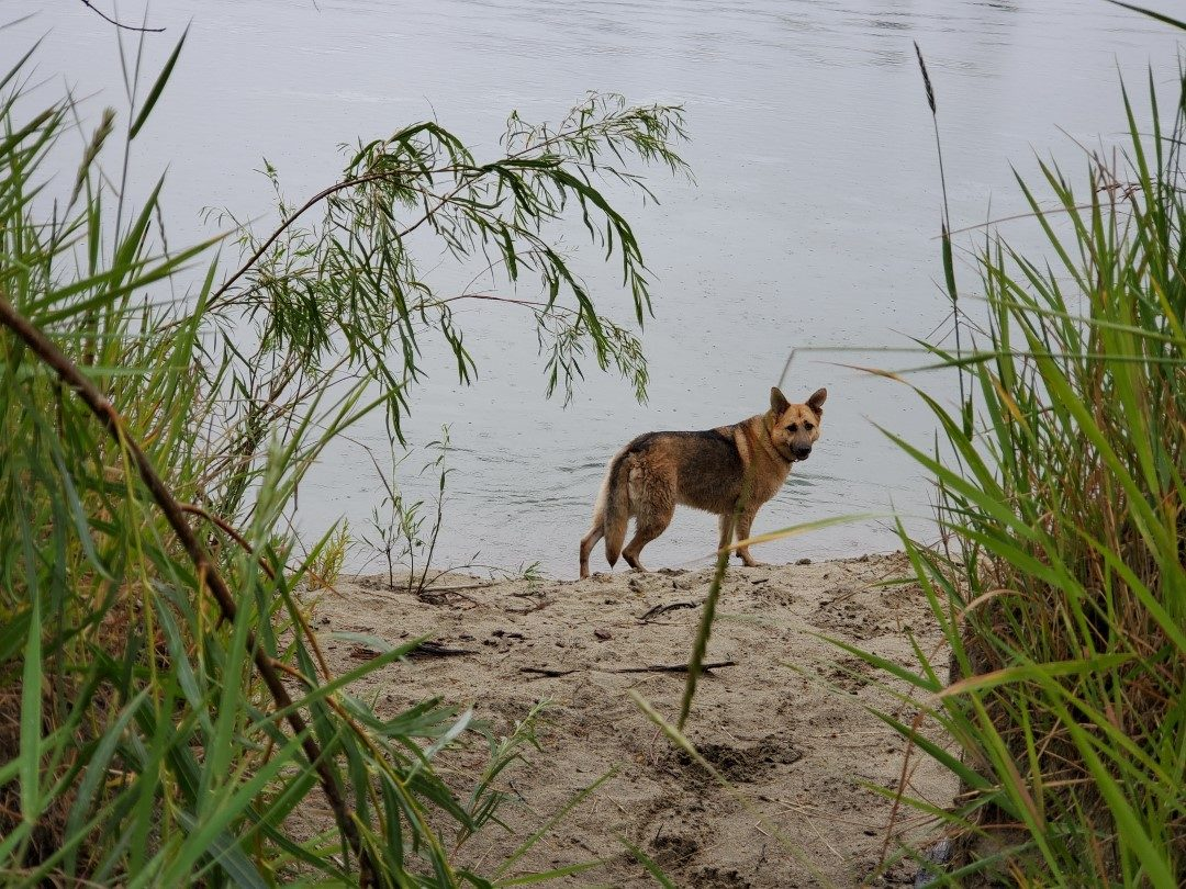 Mission Flats Nature Park, Off-Leash Dog Park, Kamloops, BC