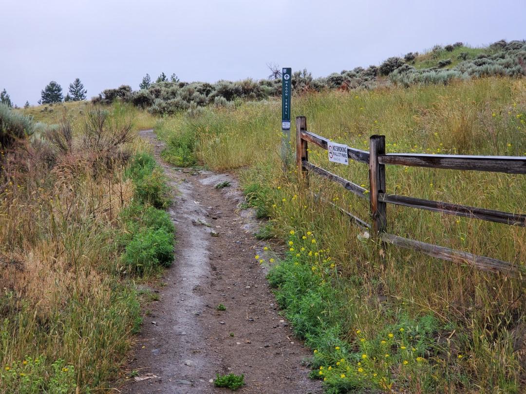 Sahali Terrace Nature Park, Off-Leash Dog Park – Kamloops, BC (2)
