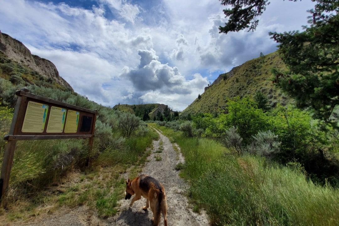 Dallas-Barnhartvale Nature Park, Off-Leash Dog Park, Kamloops, BC