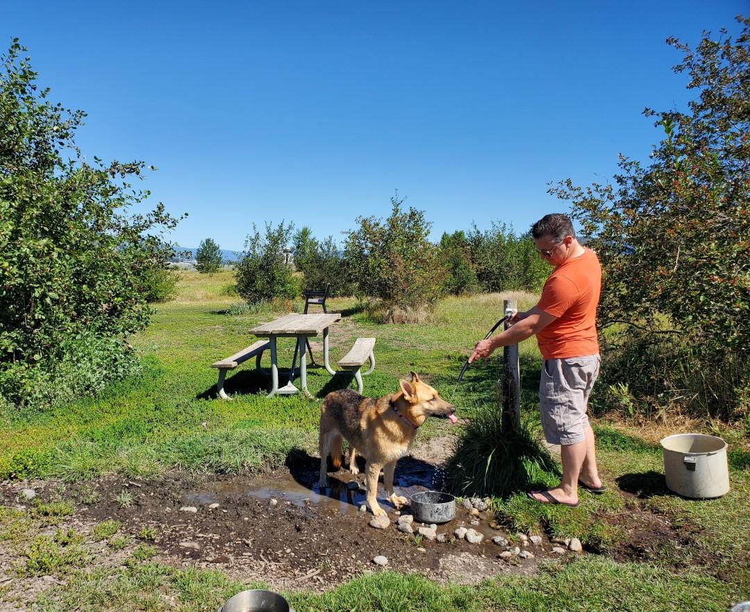 Ellison Off-Leash Dog Park – Kelowna BC (5)