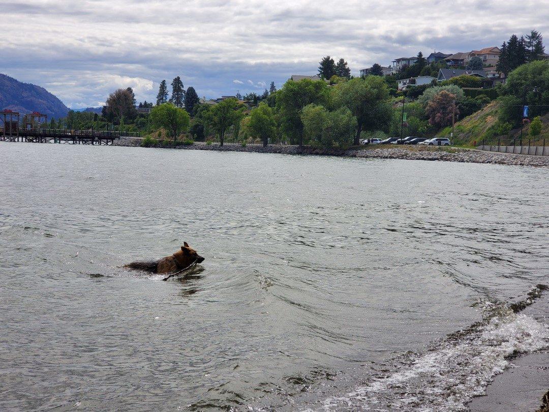Gellatly Off-Leash Dog Park (Beach), West Kelowna (Westbank), BC (1)