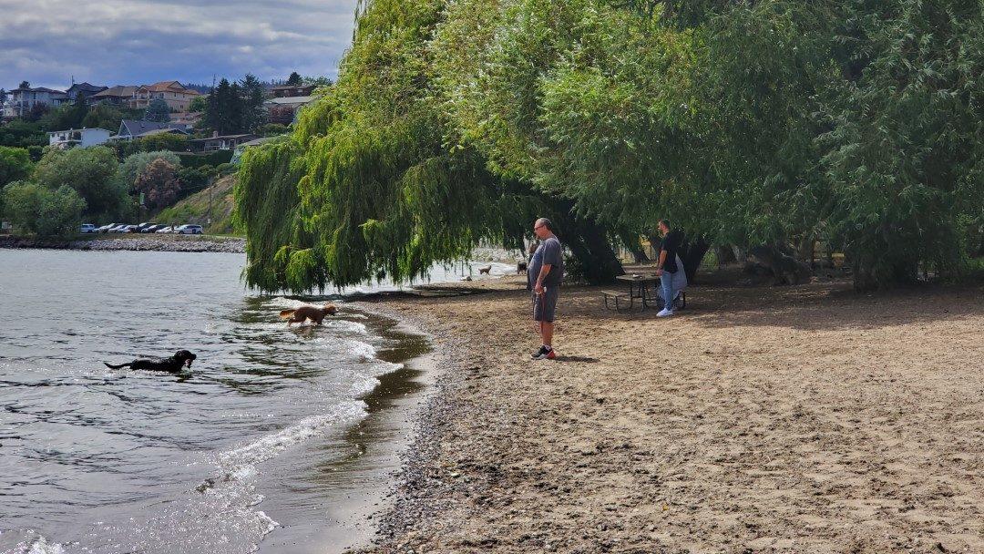 Gellatly Off-Leash Dog Park (Beach), West Kelowna (Westbank), BC (3)