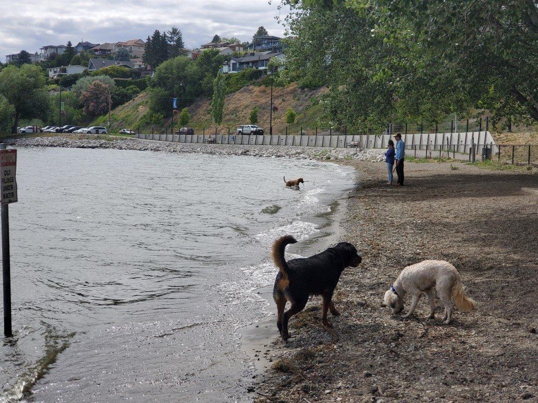 Gellatly Off-Leash Dog Park (Beach), West Kelowna (Westbank), BC (5)