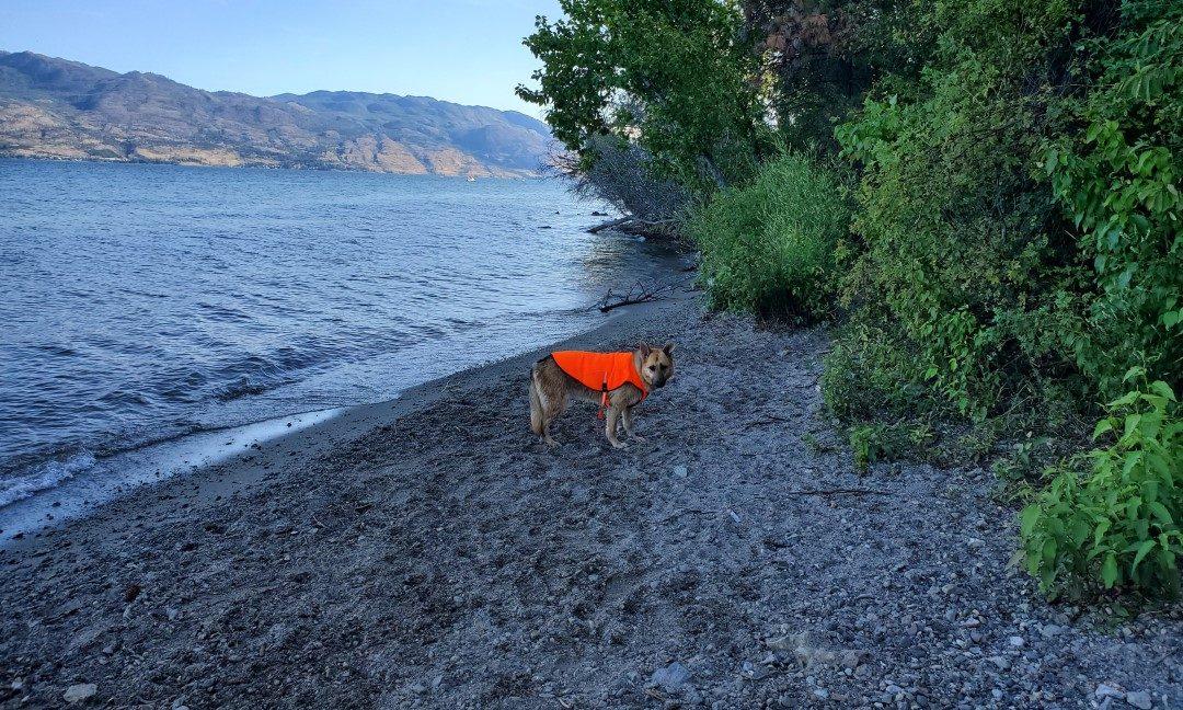 Kalamoir Beach Regional Off-Leash Dog Park - West Kelowna - BC (9)
