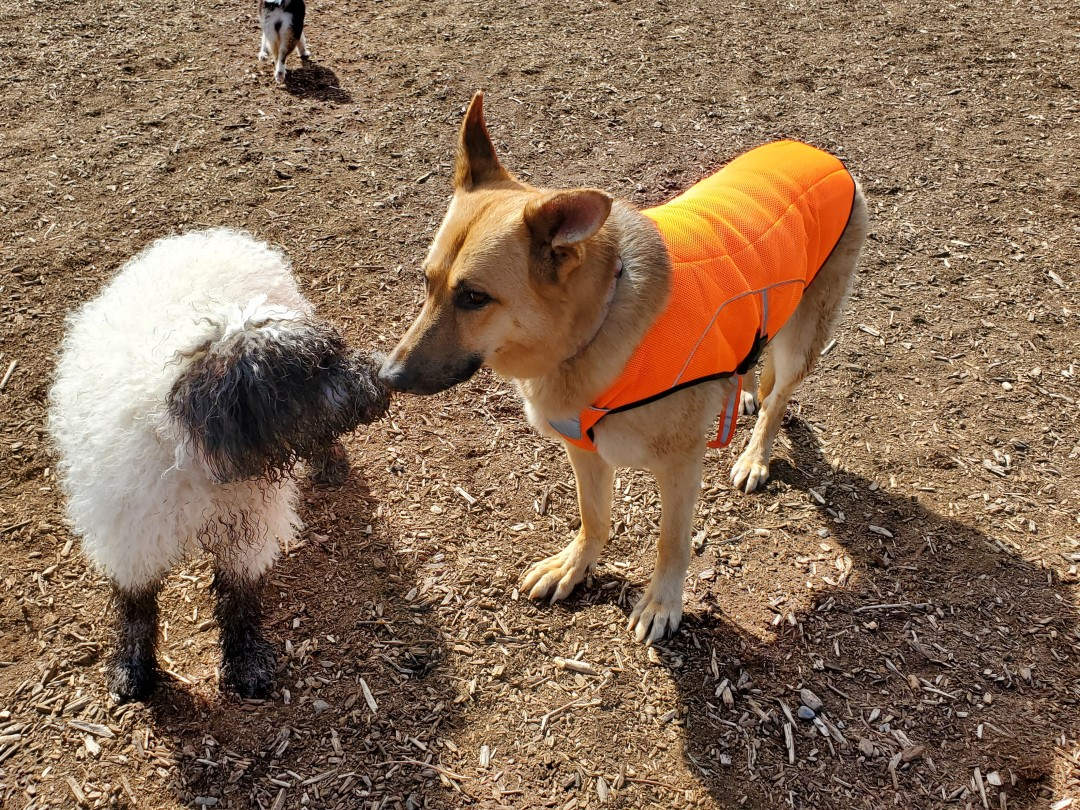 Shannon Woods Off-Leash Dog Park – West Kelowna – BC (3)