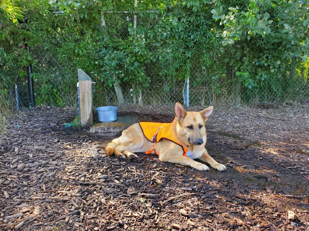 Shannon Woods Off-Leash Dog Park – West Kelowna – BC (5)