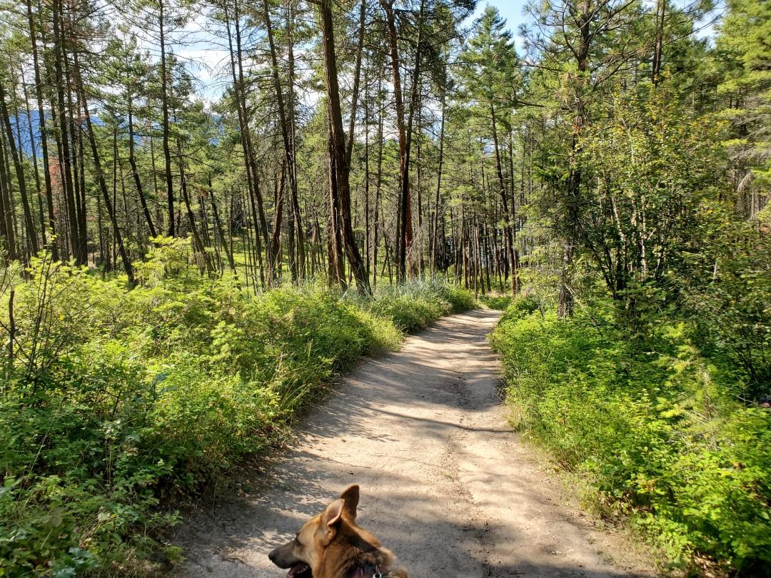 Ellison Provincial Park Off-Leash Dog Park (Beach) – Vernon – BC (4)