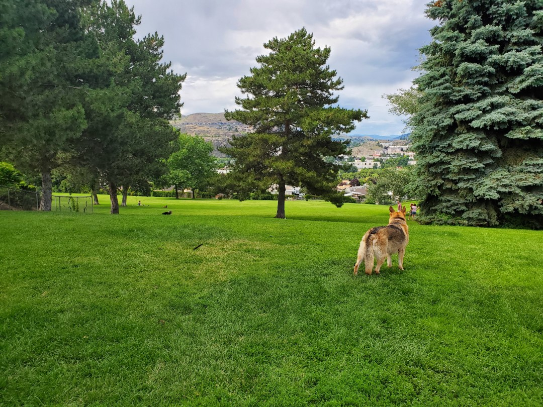 Mission Hill Off-Leash Dog Park – Vernon – BC (3)