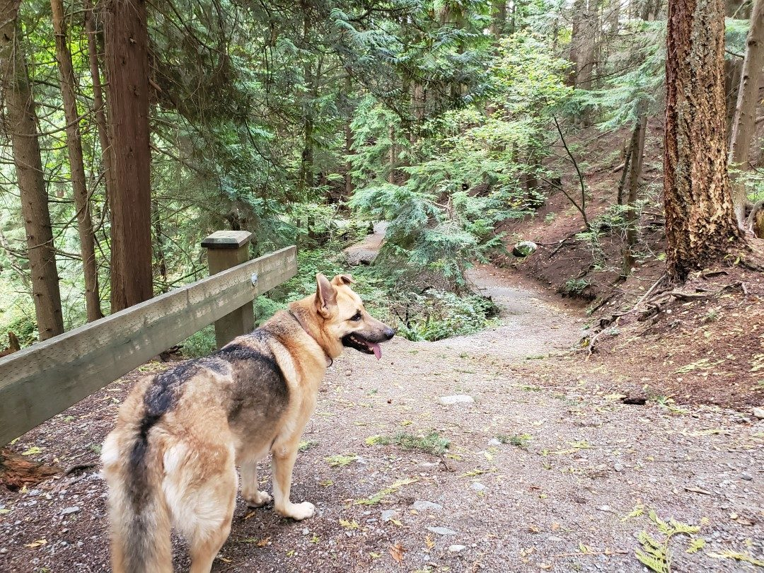 Westhill Off-Leash Dog Park (Hike) – Port Moody – BC