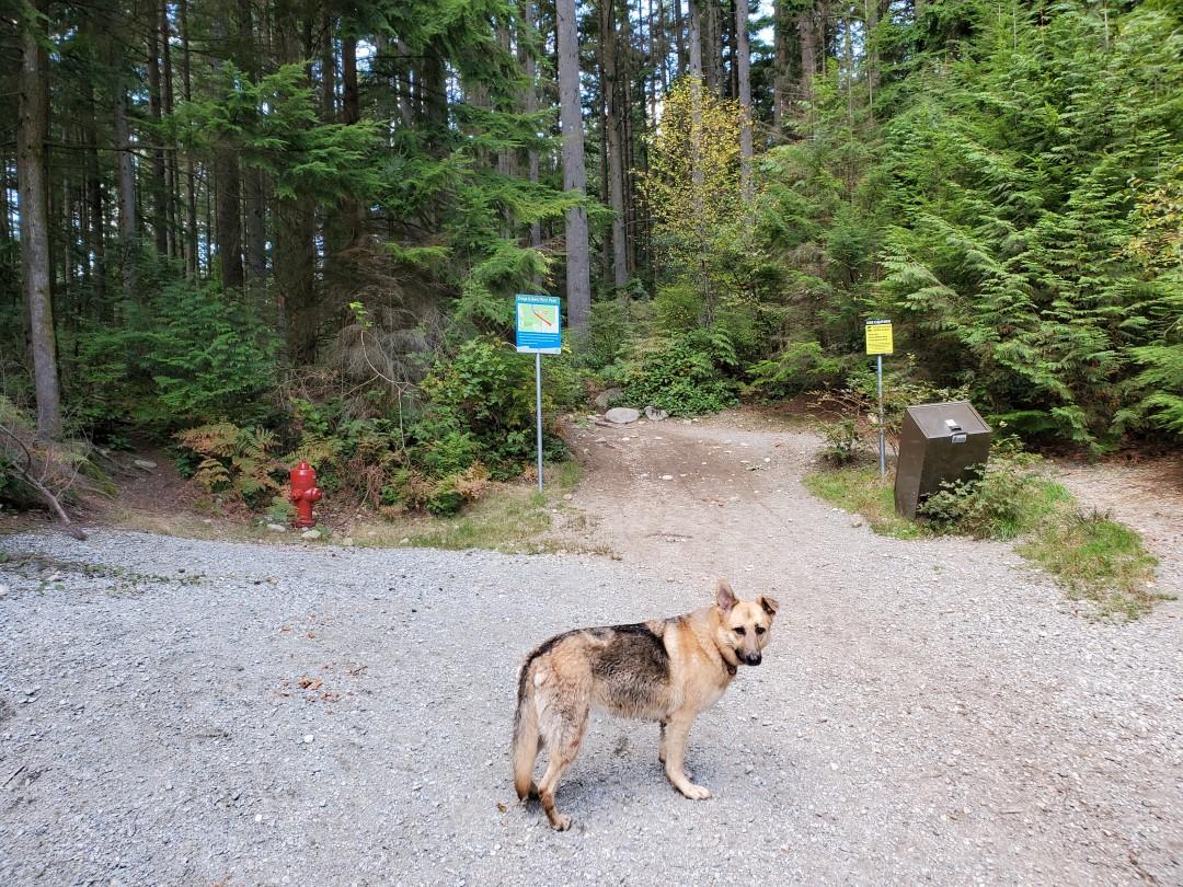 Bert Flinn Off-Leash Dog Park – Port Moody – BC (4)