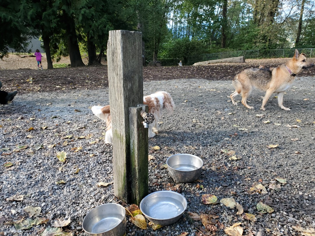 Rocky Point Off-Leash Dog Park – Port Moody – BC (3)
