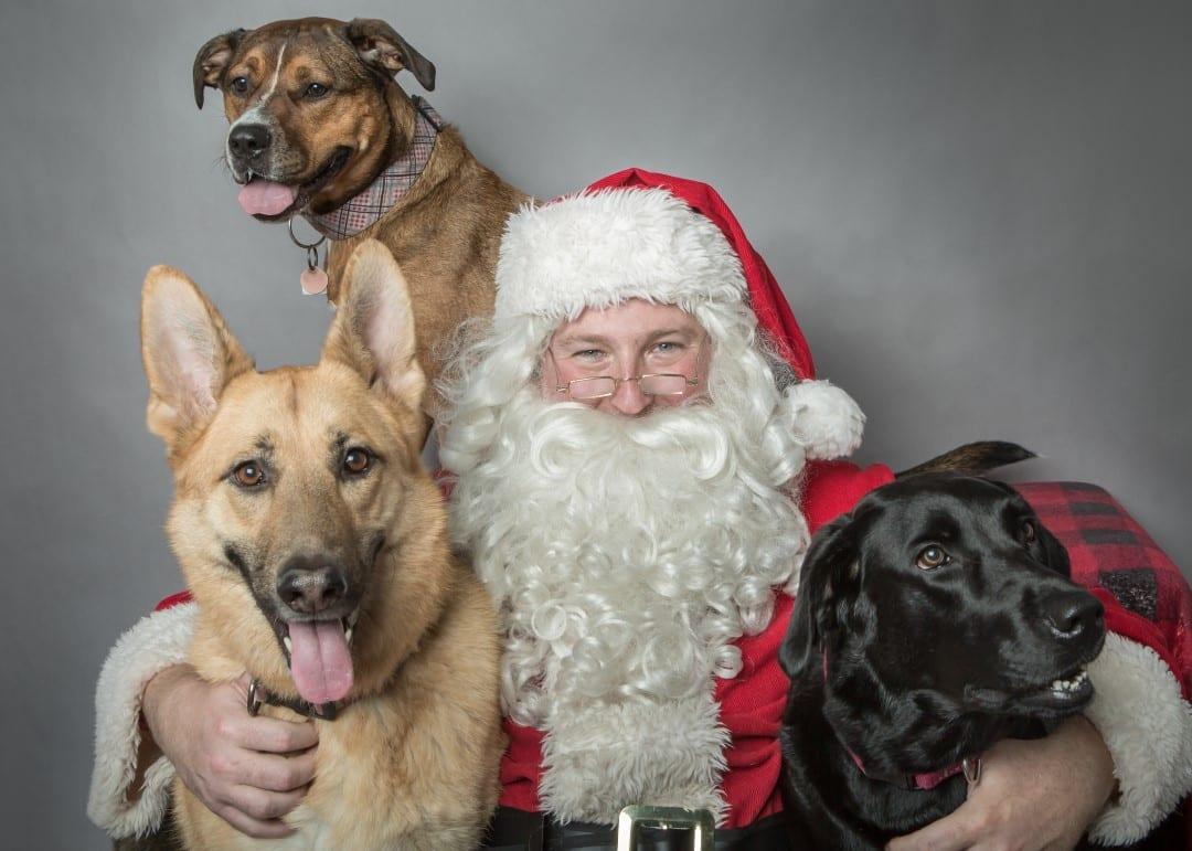 Avy Santa