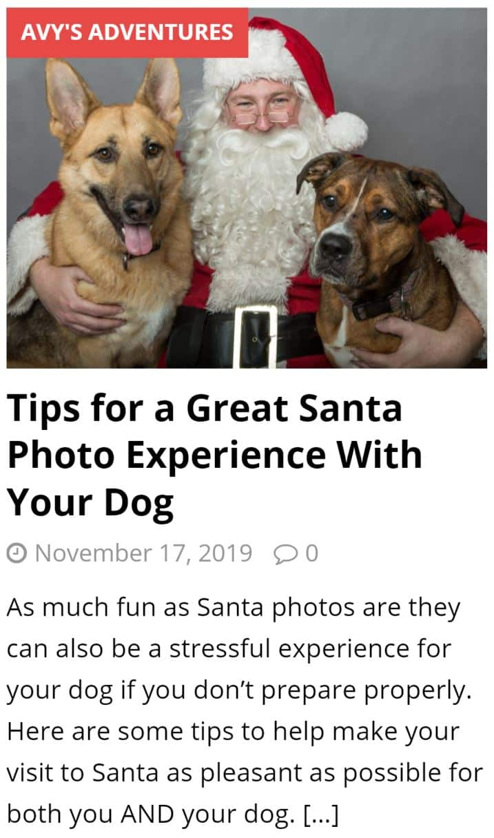 Tips for a Great Santa Photo Experience with your Dog